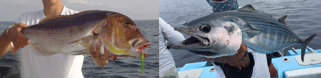 Pêche en mer denti au jig et thonidé à la traine sur pecheur peche com
